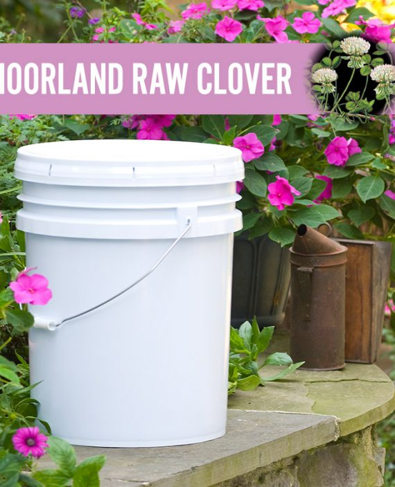 Moorland Raw Clover Honey Pail