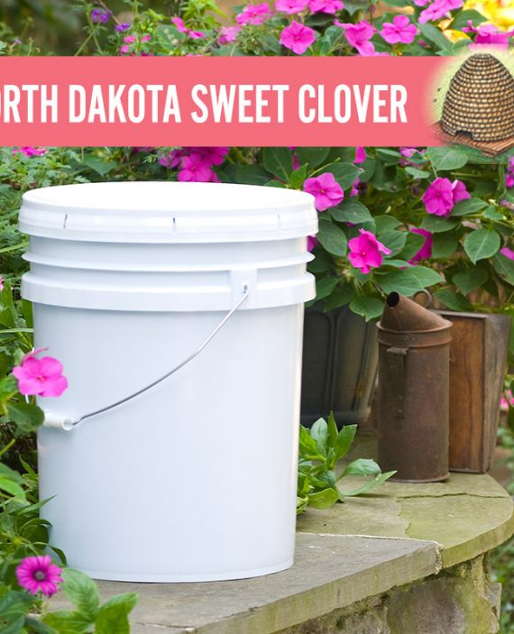 North Dakota Sweet Clover Honey Pail
