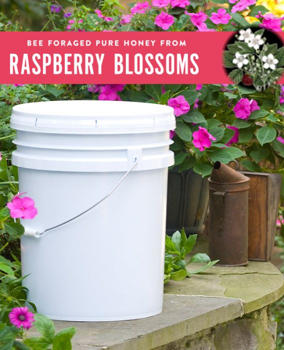 Raspberry Honey Pail